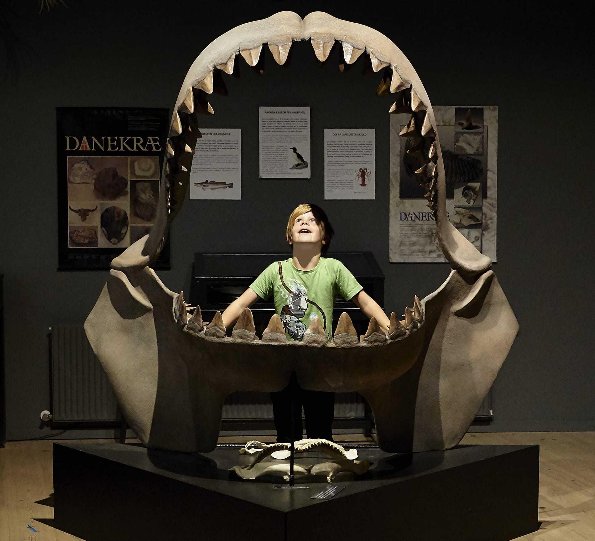 Gram Lergrav - Palæontologi
